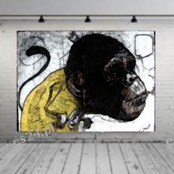 obraz szympans Pozostałe