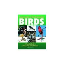 Encyclopedia of North American Birds An Essential Guide to Common Birds of North America ptaki ameryki północnej ornitologia