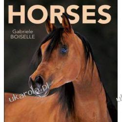 Horses Their Temperament And Elegance