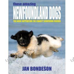 Nowofundlandy Those Amazing Newfoundland Dogs Broń pancerna