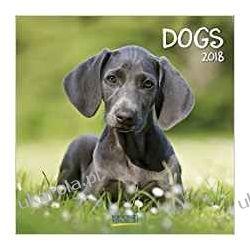 Kalendarz Psy Dogs 2018 Calendar