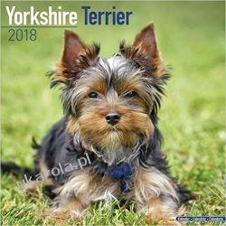 Kalendarz Yorkshire Terrier Calendar 2018 Calendar