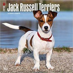 Kalendarz Jack Russell Terriers International Edition 2018 Wall Calendar Pozostałe