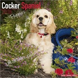 Kalendarz Cocker Spaniel Puppies Calendar 2018