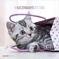 Kalendarz Kotki Kittens Calendar 2018 Kalendarze książkowe
