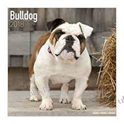 Kalendarz Bulldog 2018 Calendar