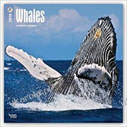 Kalendarz Wieloryby Whales 2018 Wall Calendar Pozostałe