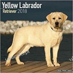Kalendarz Yellow Labrador Retriever 2018 Calendar Pozostałe