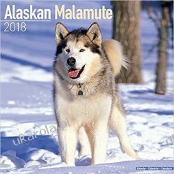 Kalendarz Alaskan Malamute 2018 Calendar Książki i Komiksy