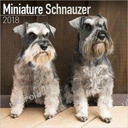 Kalendarz Sznaucery Miniaturowe Schnauzer Miniature 2018 Calendar Książki i Komiksy