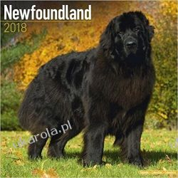 Kalendarz Nowofundlandy Newfoundland 2018 Calendar Książki i Komiksy