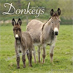 Kalendarz Osły 2018 Donkeys Calendar Książki i Komiksy