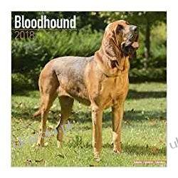 Kalendarz Bloodhound 2018 Calendar Książki i Komiksy