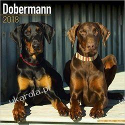 Kalendarz Dobermann 2018 Calendar Dobermany Książki i Komiksy