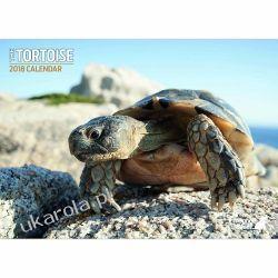 Kalendarz Tortoise 2018 A4 Calendar żółwie turtles Książki i Komiksy