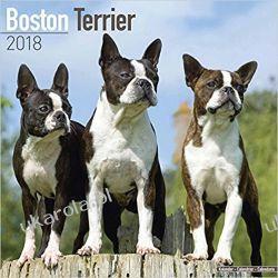 Kalendarz Boston Terrier 2018 Calendar