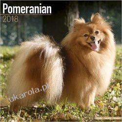 Kalendarz Szpic Pomorski Pomeranian 2018 Calendar