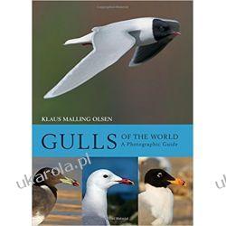 Gulls of the World Kalendarze książkowe