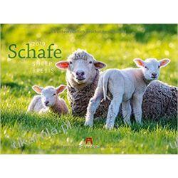Kalendarz Owce Sheep 2019 Calendar