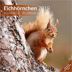 Kalendarz z wiewiórkami Squirrels 2019 Calendar