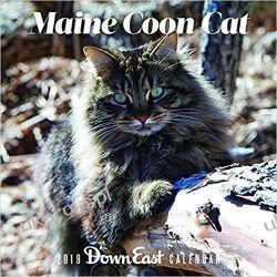 Kalendarz Koty Maine Coon Cat 2019 Calendar Lotnictwo