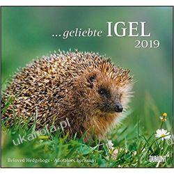 Kalendarz Jeże 2019 Beloved hedgehogs Calendar