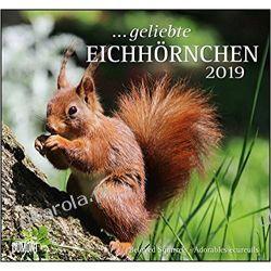 Kalendarz Beloved squirrels 2019 Wiewiórki Calendar
