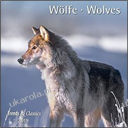 Kalendarz Wilki Wolves 2019 Calendar
