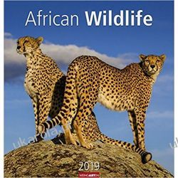 Kalendarz African Wildlife Calendar 2019 Dzikie Życie Afryki