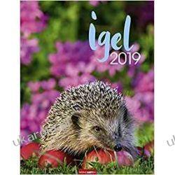 Kalendarz Jeże 2019 Hedgehogs Calendar
