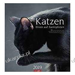 Kalendarz Koty 2019 Cats Calendar