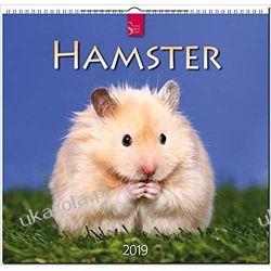 Kalendarz Chomiki Hamster 2019 Calendar Zagraniczne
