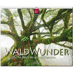 Kalendarz Lasy Drzewa Forest 2019 Calendar Gadżety i akcesoria