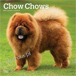 Kalendarz Chow Chows 2019 Square Wall Calendar Albumy i czasopisma