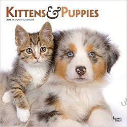 Kalendarz Koty i Psy Kittens & Puppies 2019 Square Wall Calendar