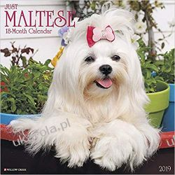 Kalendarz Just Maltese 2019 Calendar Maltańczyki Pozostałe