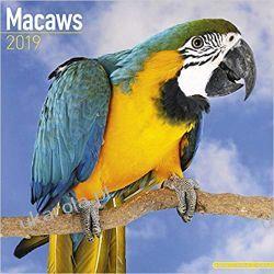 Kalendarz Papugi Ary Macaws Calendar 2019