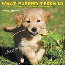 What Puppies Teach Us 2019 Wall Calendar
