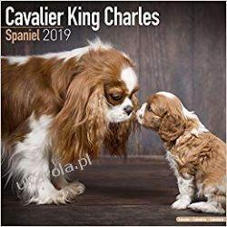Kalendarz Cavalier King Charles Spaniel Calendar 2019