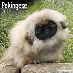 Kalendarz Pekińczyk Pekingese Calendar 2019 Pozostałe