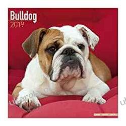 Kalendarz Bulldog Calendar 2019
