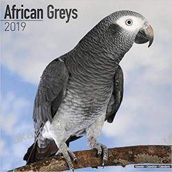 Kalendarz Żako African Greys Calendar 2019