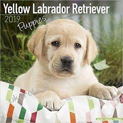 Kalendarz Yellow Labrador Retriever Puppies Calendar 2019 Kalendarze książkowe