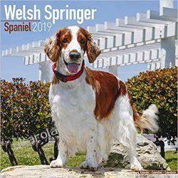 Kalendarz Welsh Springer Spaniel Calendar 2019