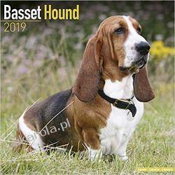 Kalendarz Basset Hound Calendar 2019