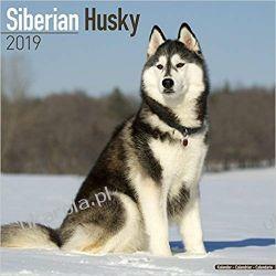 Kalendarz Siberian Husky Calendar 2019