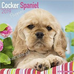 Kalendarz Cocker Spaniel Puppies Calendar 2019