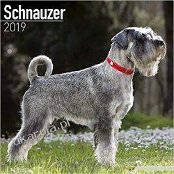 Kalendarz Sznaucery Schnauzer Calendar 2019 Kalendarze ścienne