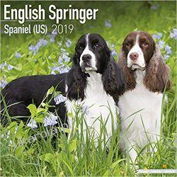 Kalendarz English Springer Spaniel (US) Calendar 2019