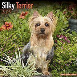 Kalendarz Silky Terrier Calendar 2019  Pozostałe